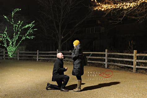 zoo lights chicago tickets angel eyes photography 187 engagement
