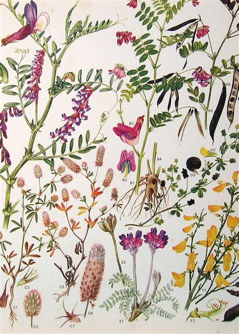 botanical print wallpaper vintage botanical prints flowers nina flickr
