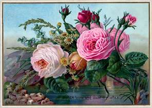 free public domain vintage image stunning roses the
