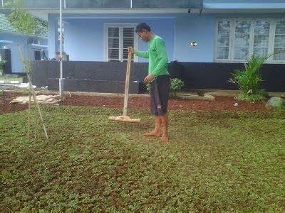 Su Rumput suplayer rumput rumput gajah mini rumput jepang dll