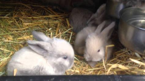 kaninchen babys mit  wochen youtube