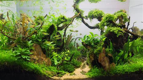 Lu Aquarium Aquascape 40l premier aquascape