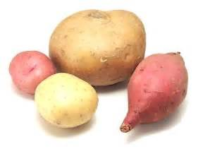 potato like root vegetable cook s thesaurus tubers