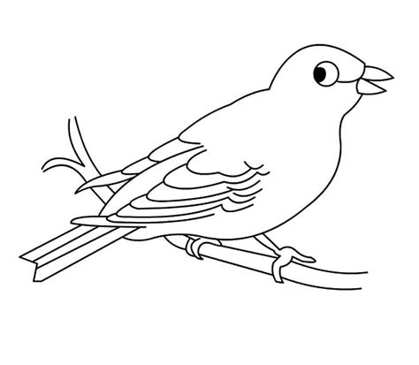 coloring pages canary bird 82 coloring pages canary bird bird coloring page