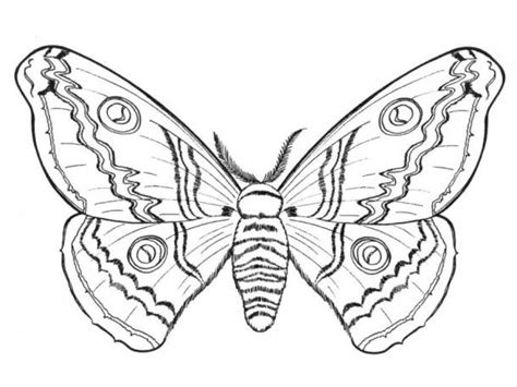 difficult butterfly coloring pages 600 best images about digi sts on pinterest coloring