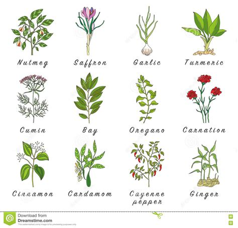 herb grower s sheet set of spices herbs and officinale plants icons healing plants stock vector image 73659548