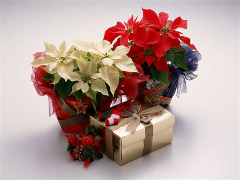christmas ideas christmas gifts ideas for people you treasure the most best birthday wishes