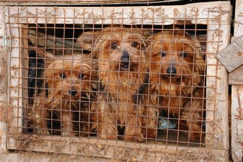 puppy mill puppy mill quotes quotesgram