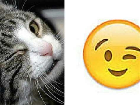 emoji ngakak quot kumpulan kucing emoji yang bikin ngakak video lucu