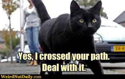 Black Cat Memes - black cat crossing meme generator captionator caption