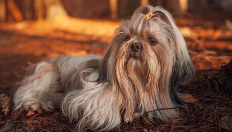 worst breeds 35 worst guard breeds