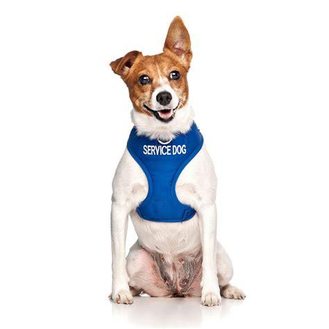 service vest harness service vest harness friendly collars