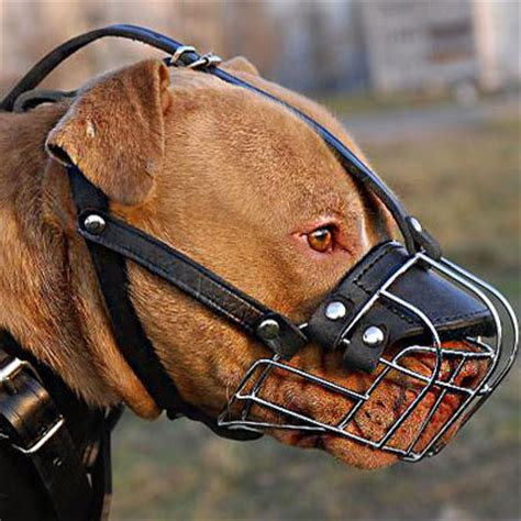 muzzle for pitbull wire basket muzzle for american pit bull terrier this muzzle is designed for
