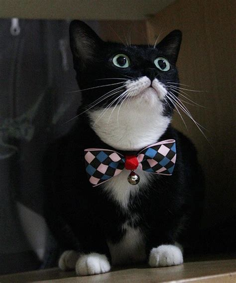 cat bow tie collar with bell checks bow ties ties