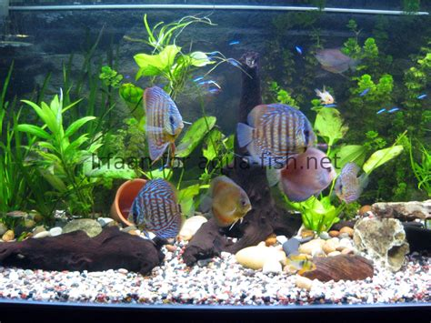 aquarium design exle decoration aquarium pas cher