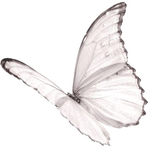 white light in pictures meaning 17 best ideas about white butterfly on