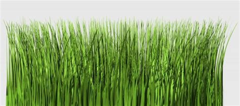 größer wirken grashalme freigestellt rilo naumann als kunstdruck oder