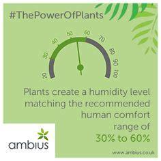 human comfort level 1000 images about plant facts on pinterest plants