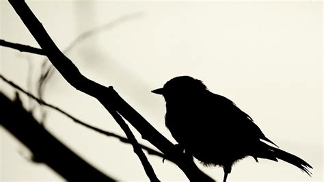black and white wallpaper with birds tumblr backgrounds black and white birds wallpaper