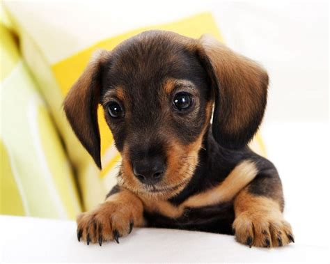 awesome dogs 7 awesome dogs pictures and breeds in biological science picture directory