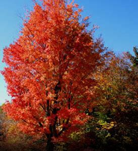 what grows on in rhode island news forests trees wilderness arboreta arboriculture