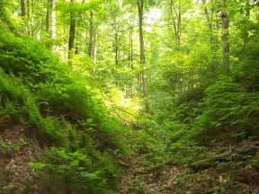 St Forest Sambisa Forest