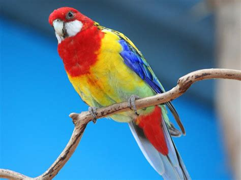 colorful parrot wallpaper parrot hd wallpapers desktop pictures one hd wallpaper