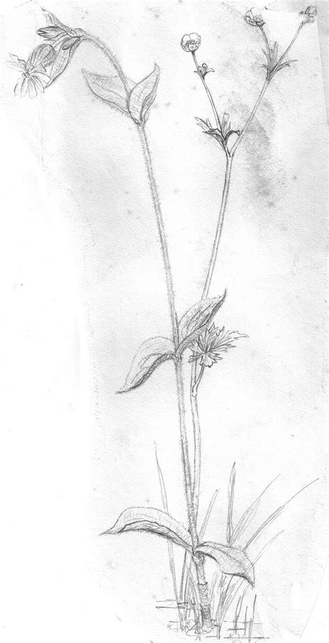 Twig Putih 28 gambar sketsa sepatu hitam putih sketsa bunga hitam