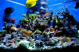 fish tank aquascape designs aquascape aquariums design decosee