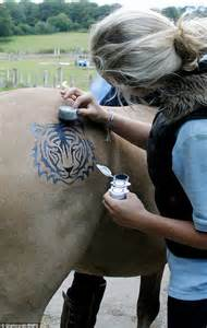 sally rees creates temporary tattoos for horses daily