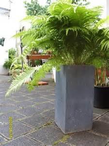 schöne pflanzen für den garten chestha idee garten pflanzen