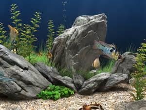 Aquascape Ideas Tropical Gallery Barrier Reef