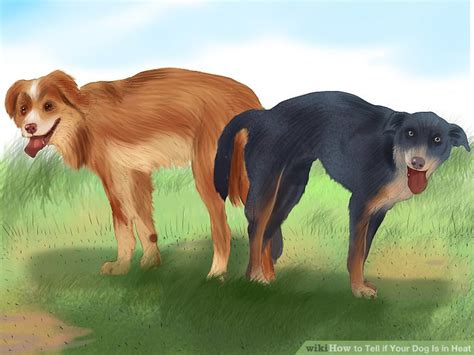 signs your is in heat 4 ways to tell if your is in heat wikihow
