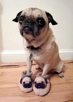 children s pug slippers baby pugs on baby pugs pugs and pug puppies