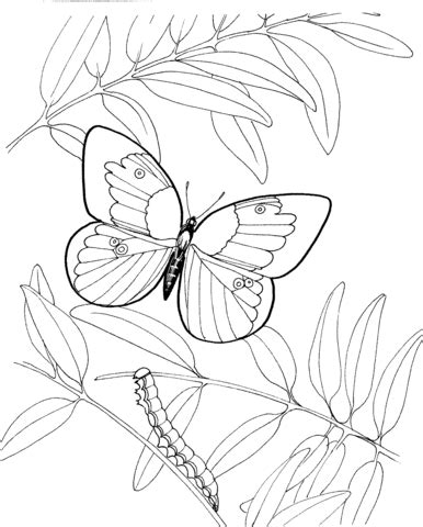 caterpillar and butterfly 2 coloring page supercoloring com caterpillar and butterfly 3 coloring page free printable