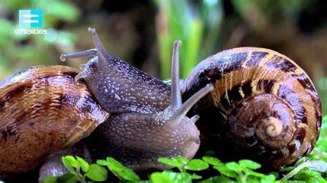 animales vertebrados donde viven como nacen animales invertebrados donde viven como nacen