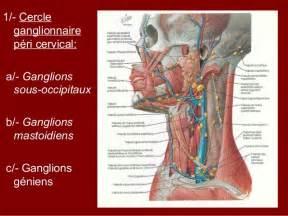 lymphatique du cou