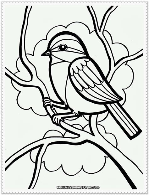 coloring pages birds realistic bird coloring pages realistic realistic coloring pages
