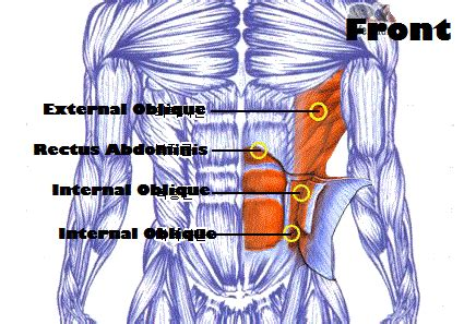 Ab And Back Bench Abdominals Workout