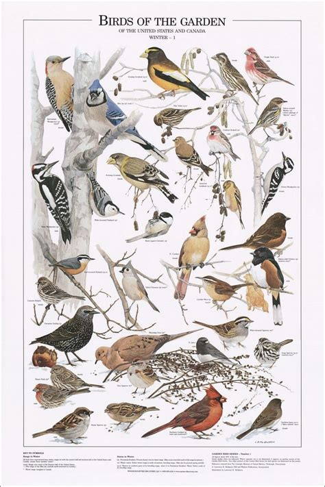 birds of the garden winter i identification chart art