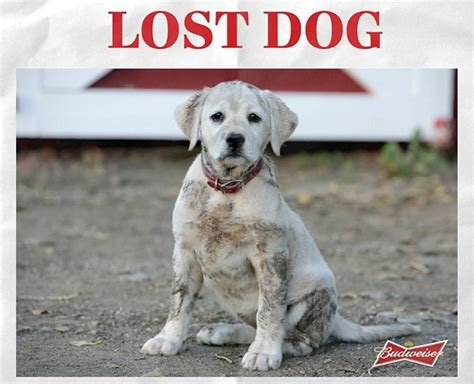 budweiser puppy commercial 2013 budweiser lost bowl 2015 search engine at search