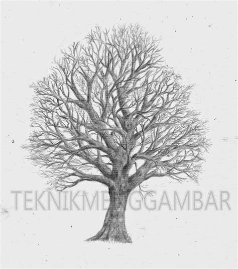 tutorial gambar pohon teknik menggambar pohon tak berdaun teknik menggambar