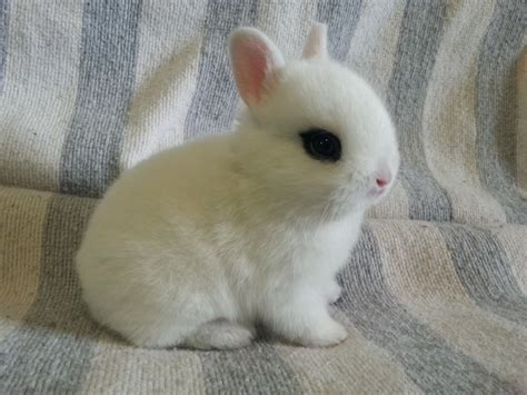 caracter 237 sticas y cuidados del conejo hodot 161 no te lo
