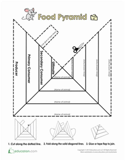 blank food web template trophic level pyramid worksheet education