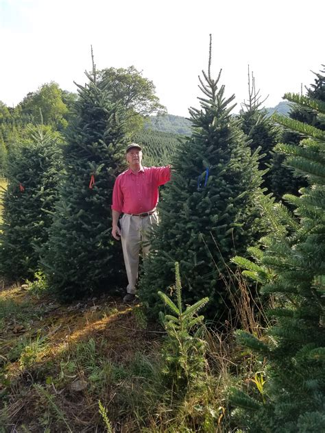 tree farm near me choose and cut christmas tree farms nc