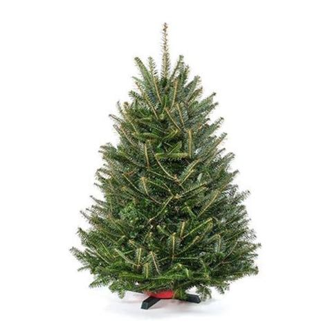 real christmas trees delivered fresh cut fraser fir