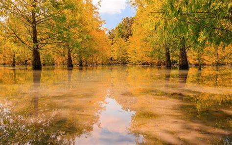 swamp wallpaper autumn fall hd desktop wallpapers  hd