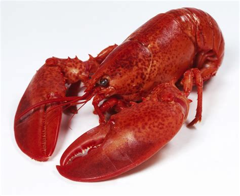 the lobster the lobster is not about seafood our relationship with