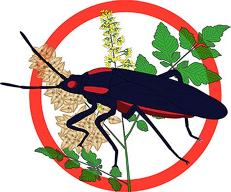 backyard bugs bugs in our backyard