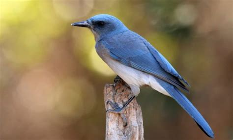 blue colored birds 10 amazing blue colored birds in the world